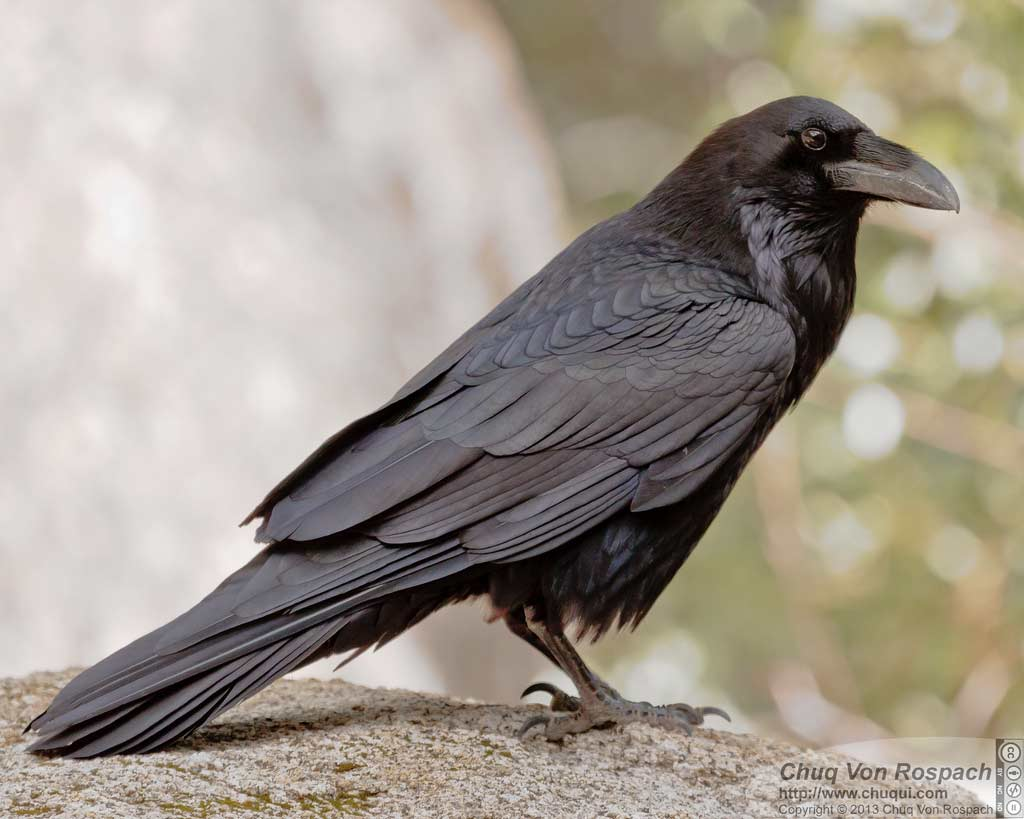 Image Result For Kevin Crows Videos