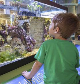 Aquarium - Attractions