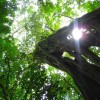 A student studying abroad with CIEE: Monteverde - Summer Tropical Ecology and Conservation
