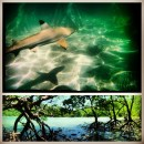 Wildlands Studies: TheThailand Project: Marine And Coastal Ecology Of The Indo-Pacific Photo