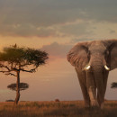 Study Abroad Reviews for Cross Continental: Volunteer Abroad in Kenya