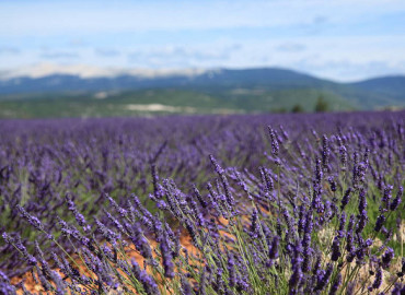 Study Abroad Reviews for CISabroad (Center for International Studies): Summer in Aix-en-Provence