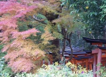 Study Abroad Reviews for ISEP Exchange: Hirakata - Exchange Program at Kansai Gaidai University