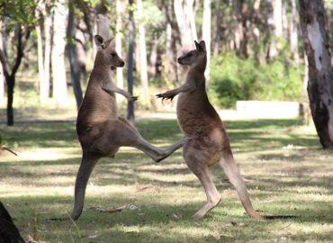 Study Abroad Reviews for University of Georgia, Discover Abroad: Australia - Winter Program