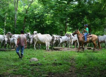 Study Abroad Reviews for ECOFARMS Panama: Jungle Farming Program