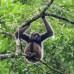 Photo of International Field Studies: Wildlife Conservation - Study Abroad Borneo