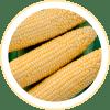 Milho Verde AG1051