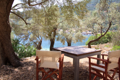 Table setting among olive grows with access to the sea