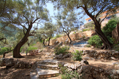 Olive trees are all around the villa