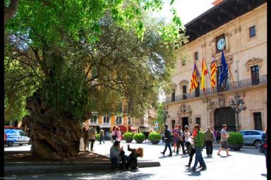 Brossa Studio 3, Palma de Mallorca