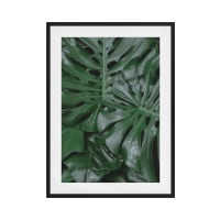 The Philodendron Print