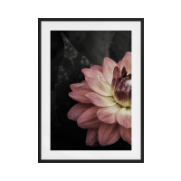 The Water Lily Print