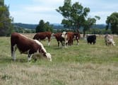 Rural & Farming Business in Bunyip North