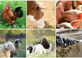Rural & Farming Business in Mooloolaba