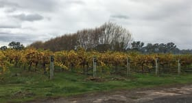 Rural / Farming commercial property for sale at Old Comaum Road Coonawarra SA 5263