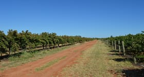 Rural / Farming commercial property for sale at 154 Kibby Road Loxton SA 5333