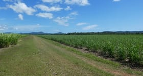 Rural / Farming commercial property for sale at 64000 Bruce Highway Innisfail QLD 4860