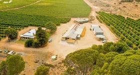 Rural / Farming commercial property sold at 473 River Road Swan Reach SA 5354
