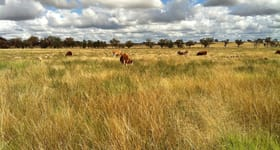 Rural / Farming commercial property for sale at Gilgai Farms Geurie NSW 2818
