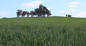 Rural / Farming commercial property sold at For Sale: Tallawang Dunedoo NSW 2844
