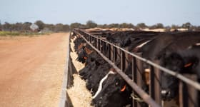 Rural / Farming commercial property for sale at WestBeef Feedlot 46 Watson Road Burakin WA 6467