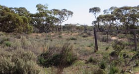 Rural / Farming commercial property for sale at 10150 Goyder Highway Westons Flat SA 5320