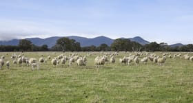Rural / Farming commercial property sold at 158-161 Napiers Road Victoria Valley VIC 3294