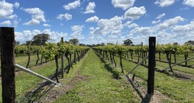 Rural / Farming commercial property for sale at Sienna Vineyard Riddoch Highway Penola SA 5277