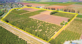 Rural / Farming commercial property for sale at Farm 312/9-15 Henry Lawson Drive Leeton NSW 2705