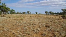 Rural / Farming commercial property for sale at 918 Sunnyside Road Wee Waa NSW 2388