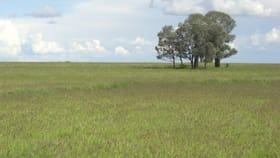 Rural / Farming commercial property for sale at 0 Argyle Park Wallumbilla QLD 4428