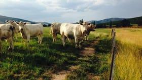 Rural / Farming commercial property sold at 1281 Taradale Road Tumbarumba NSW 2653