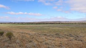 Rural / Farming commercial property for sale at Lot 254 Pepper Tree Lane Quorn SA 5433