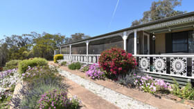 Rural / Farming commercial property for sale at 242 Fashions Mount Road Mumbil NSW 2820