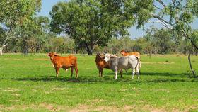 Rural / Farming commercial property sold at 5322 Reedy Creek Road Aramac QLD 4726