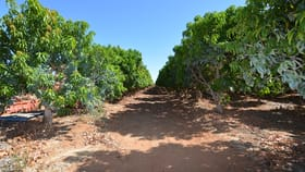 Rural / Farming commercial property for sale at 219 McGlades Road Carnarvon WA 6701