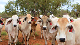 Rural / Farming commercial property sold at Narbethong Road Jericho QLD 4728
