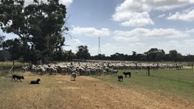 Rural / Farming commercial property for sale at 1534 Turkey Flat Road Kadathinni Three Springs WA 6519