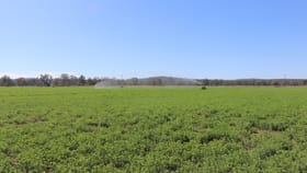 Rural / Farming commercial property for sale at 244 A Creek Road Eidsvold QLD 4627