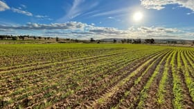 Rural / Farming commercial property for sale at Bellevue Hill Warialda NSW 2402