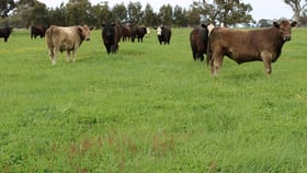 Rural / Farming commercial property for sale at 1020 Boddingtons West Road Naracoorte SA 5271
