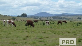 Rural / Farming commercial property for sale at 75 Backmede Road Backmede NSW 2470