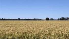 Rural / Farming commercial property for sale at 'Linwood' Kardinia Road Corowa NSW 2646