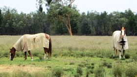 Rural / Farming commercial property for sale at 230 ACRES WEST OF Dalby QLD 4405