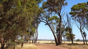 Rural / Farming commercial property for sale at 41 Stewart St Wagin WA 6315