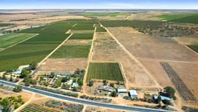 Rural / Farming commercial property for sale at 72 Kingston Road Moorook SA 5332