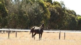 Rural / Farming commercial property sold at 95 Carthy Road Naracoorte SA 5271