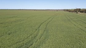 Rural / Farming commercial property for sale at 462 Micky Flat Road Curramulka SA 5580