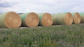 Rural / Farming commercial property sold at Lot 94 Braunacks Road Naracoorte SA 5271