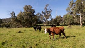 Rural / Farming commercial property for sale at 52 Maryton Lane Marysville VIC 3779